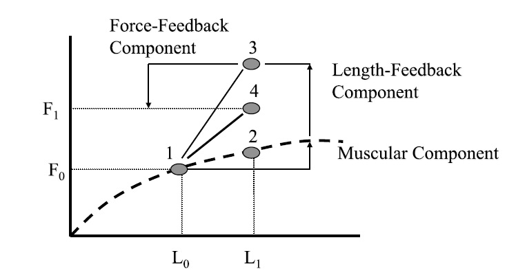 How force is produced